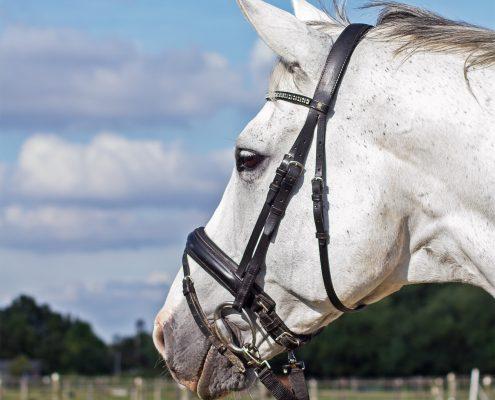 paardenportret Trakehner
