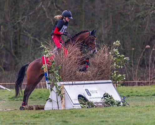 paardenfotografie SGW Amsterdamse Bos